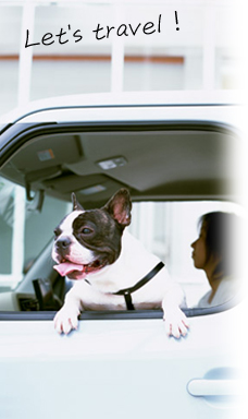 愛犬と一緒に旅に出るワケ